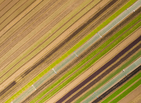Crop Rotation at Canara Farm