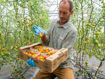 Vibrant Mixed Tomatoes