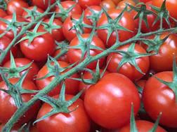 Cherry-Toms-500-x-375.jpg