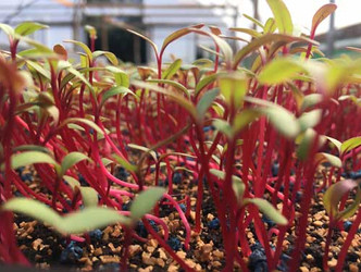 Herbs-500-x-375.jpg