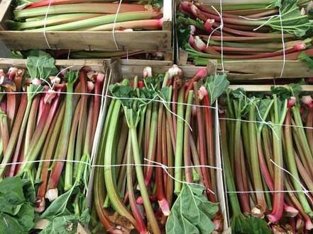 Rhubarb-500-x-375.jpg
