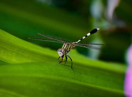 Dengue alert in pregnancy