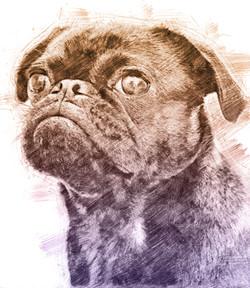 Pug-Pencil.jpg