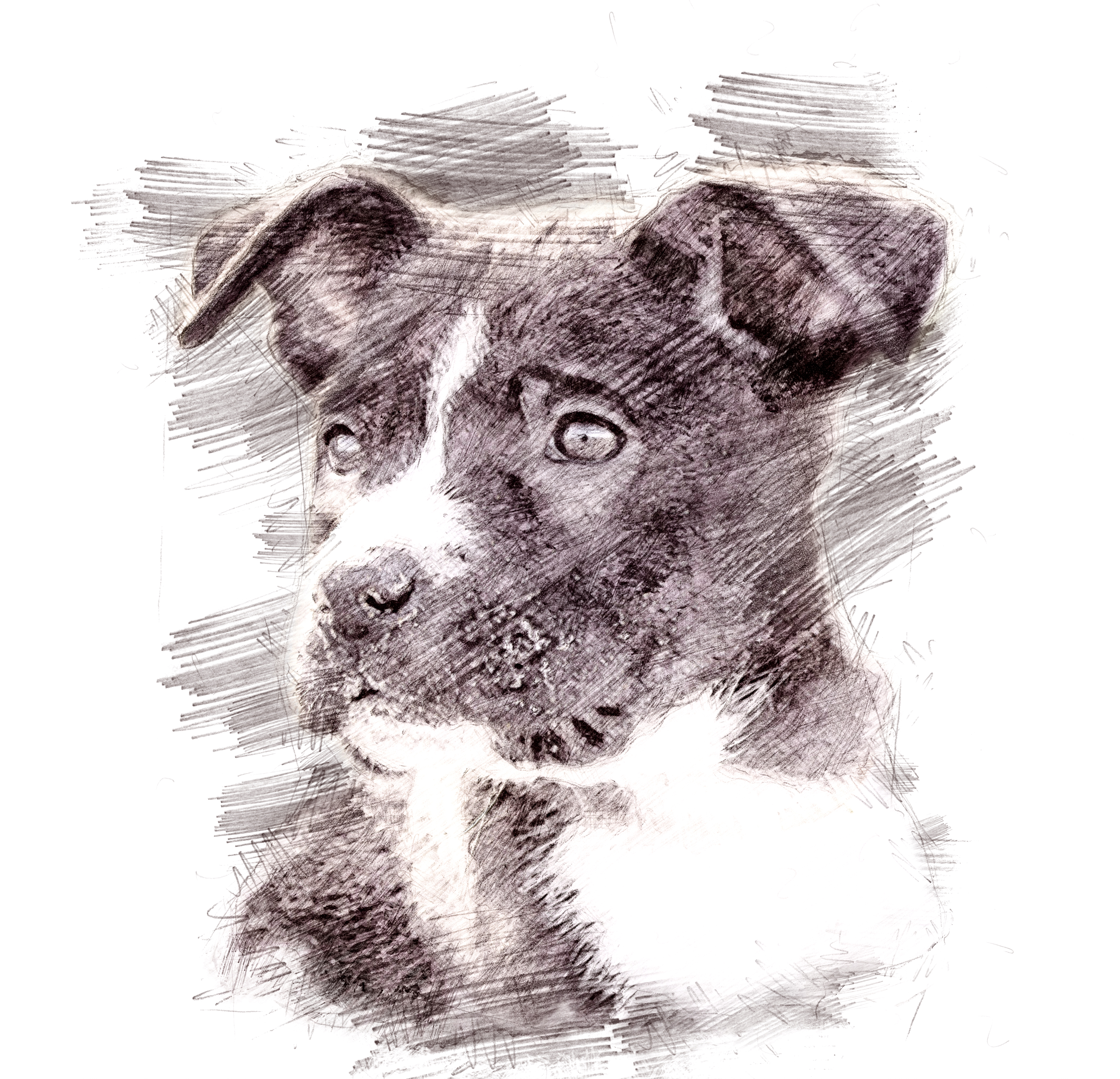 PitPuppy-PencilSketch