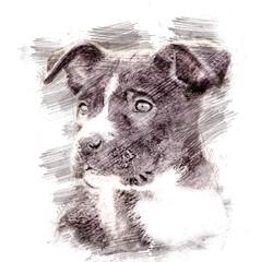 PitPuppy-PencilSketch
