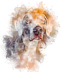 Rhett-GlassyWatercolor.jpg