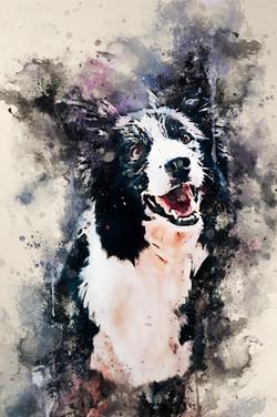 BlackBordercollie-Watercolor.jpg