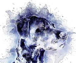 BlackLab-GlassyWatercolor.jpg