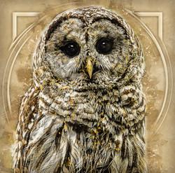 Owl-Retro