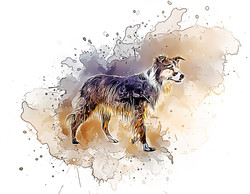 CollieBeach-GlassyWatercolor.jpg
