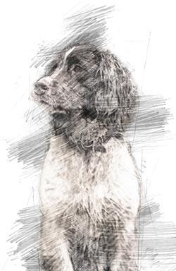 Spaniel-Pencil.jpg