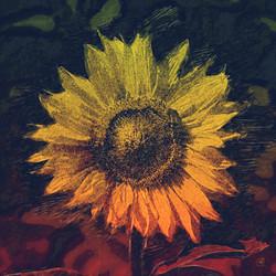 Sunflower-DigiPaint