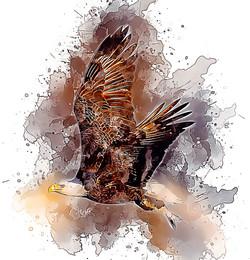 BaldEagle-Flying-GlassyWatercolor.jpg