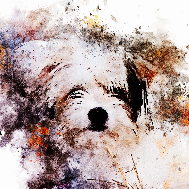 fluffyPooch-WatercolorSplatter