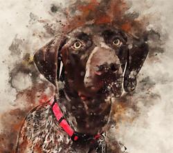 Roose-Watercolor.jpg