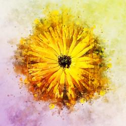 YellowFlower-WatercolorSplatter