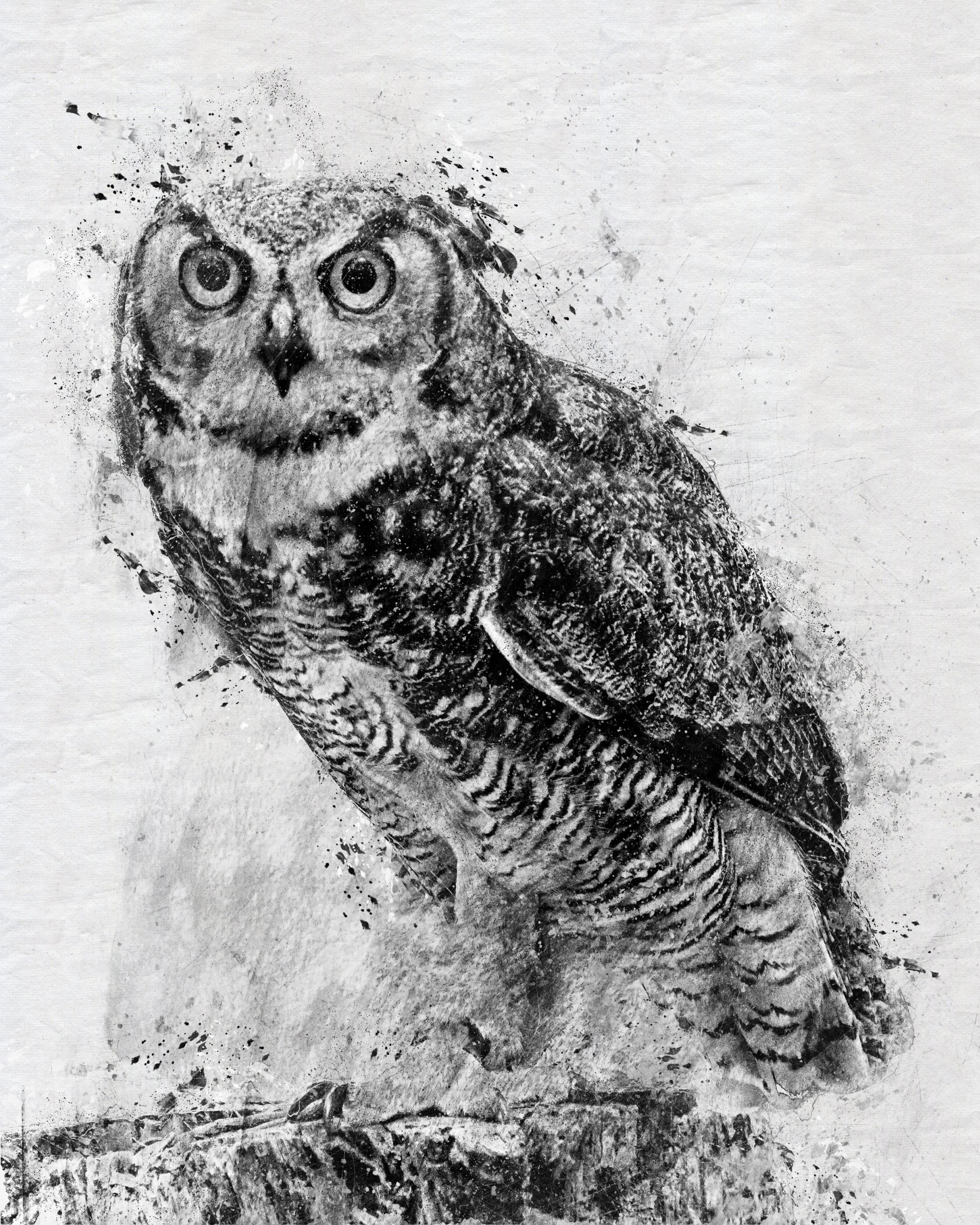 Owl-charcoalBLKWHT