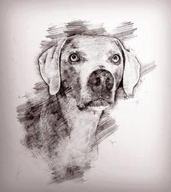 Rhett-Pencilk.jpg