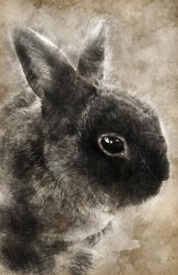 Bunny-Vintage2
