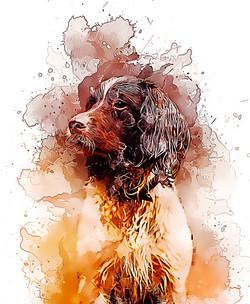 spaniel-GlassyWatercolor.jpg