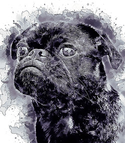 blackpug-GlassyWatercolor.jpg