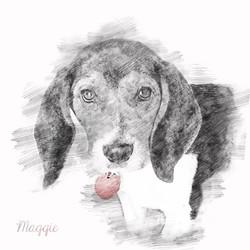 BeaglePup-Pencil
