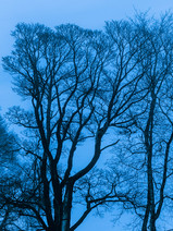 Blue Hour II