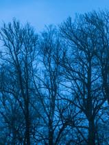 Blue Hour V