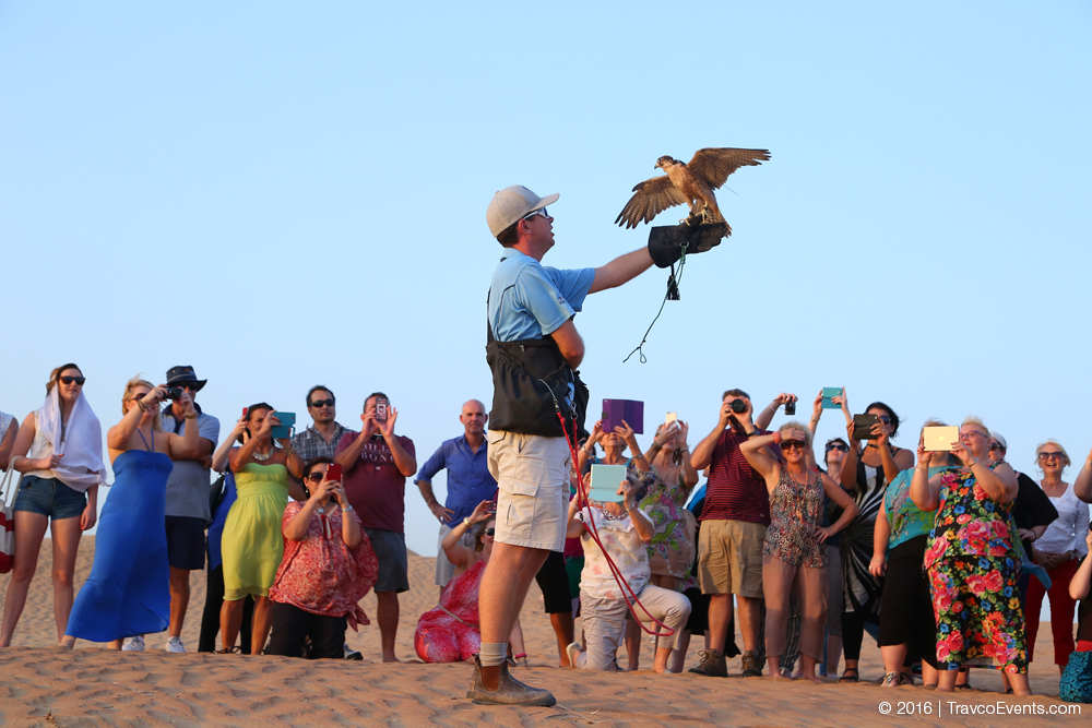 Falcon Show_TravcoEvents