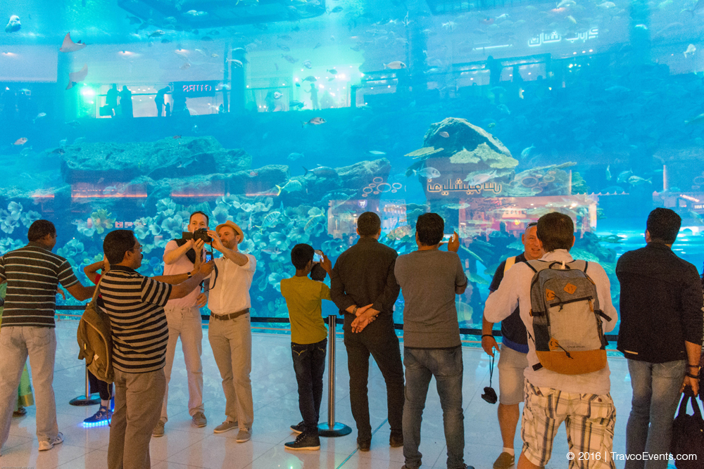 Dubai Mall Aquarium_TravcoEvents
