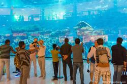Dubai Mall Aquarium_TravcoEvents
