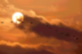 Sandhill Cranes at Sunset 3770