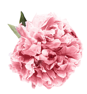 Pink flower best hair salon fort lauderdale