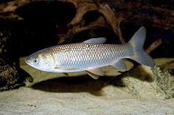 Запуск рыбы в пруд