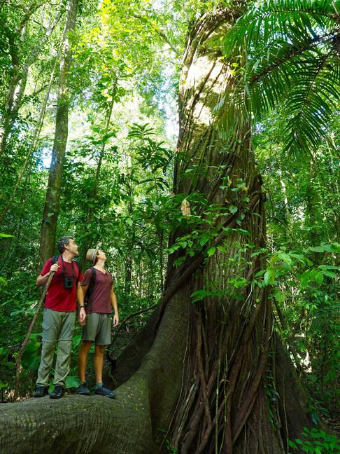 Forêt primaire, photo de Romain P.