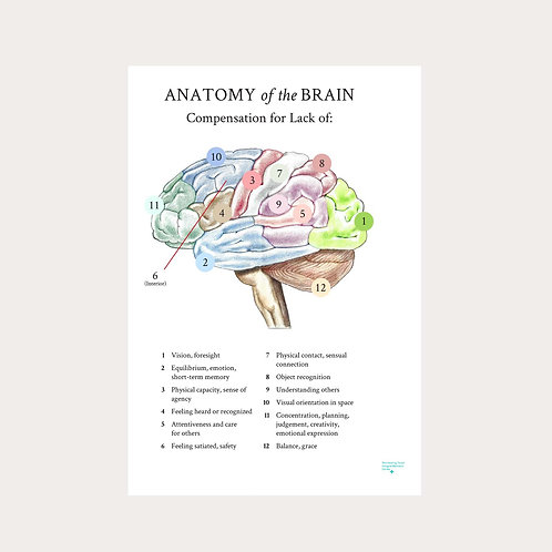 "Emma Sulkowicz ""Anatomy of the Brain"" Poster"