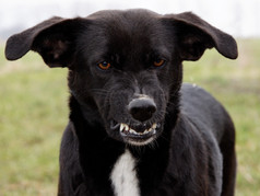 Lovebug or Landmine? Three Tips to Keep Your Dog from Going Under