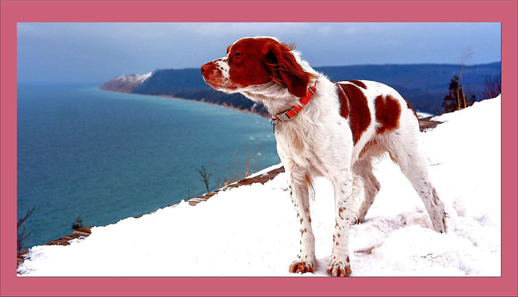 winterdog.jpg