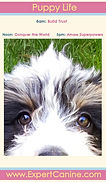 puppylifepdfcover.jpg