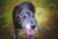 Senior Dogs Deserve More Love