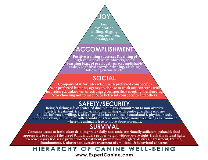 The Humane Hierarchy of Companion Canine Well-Being