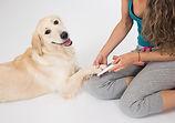Cooperative Care & Handling