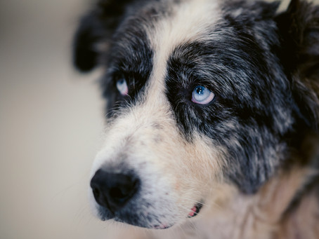 What Still Needs Fixing in Fearful Dog Fixers