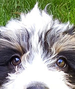 Get PROPER Puppy Socialization & Training - Happy Puppies Grow into Happy, Stable Dogs!