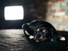 The Real Problem with TV Dog Training