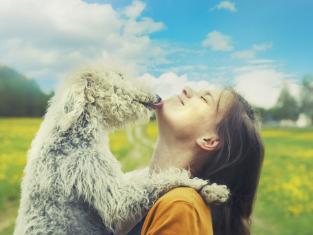CGC Essay Addendum: For Dog Lovers & Their Dogs, Please Pay Careful Attention