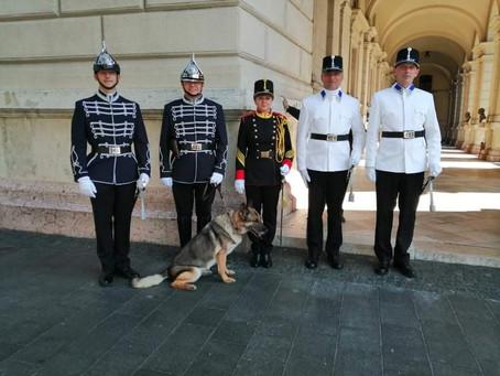 Patruljiranje pred parlamentom v Budimpešti v orožniški uniformi