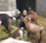 Goats_edited_edited.jpg