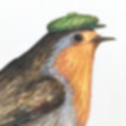 Robin redbreast with hat