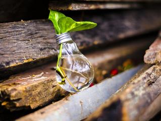 Sustentabilidade e Inovação